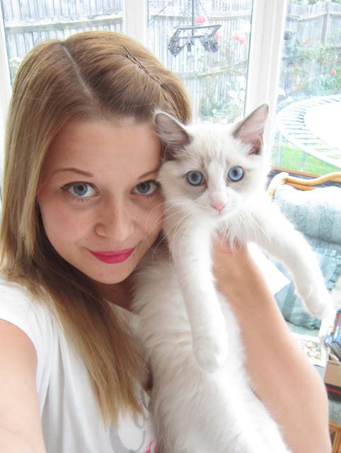 Say Hello to my New Ragdoll Kitten – Merlin! ♥