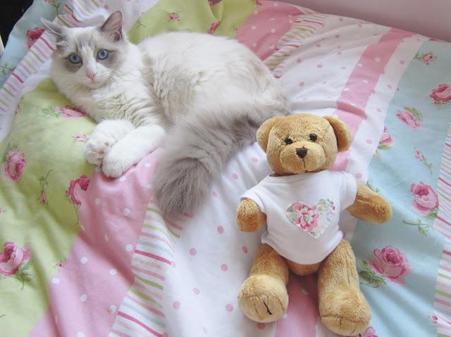 Merlin Kitten Update ♥