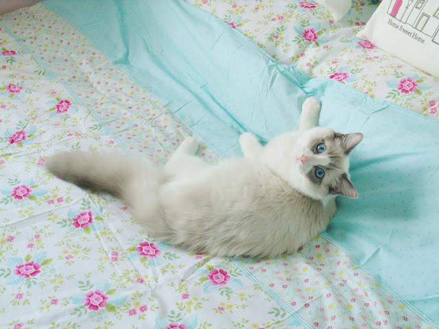 My Baby Merl ♥