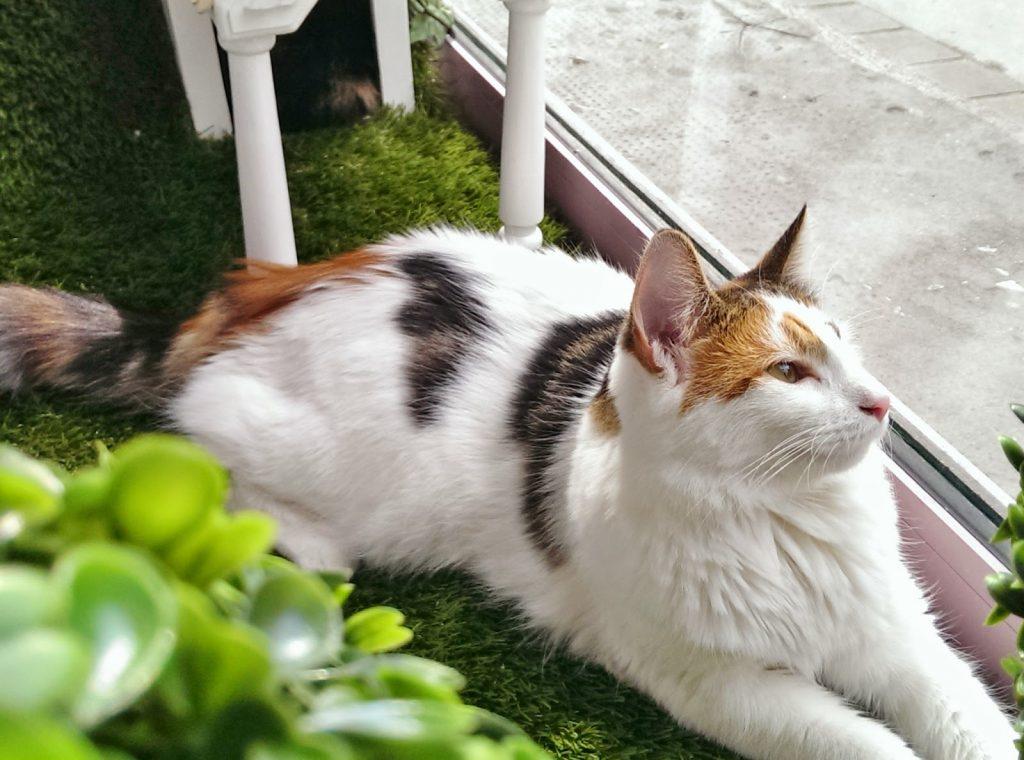Lady Dinah's Cat Emporium review