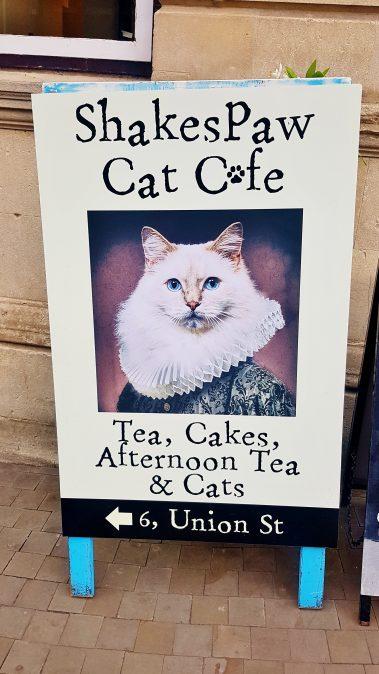 Review: Shakespaw Cat Cafe, Stratford Upon Avon