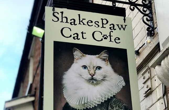 Review: Shakespaw Cat Cafe, Stratford Upon Avon